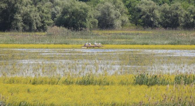 """Колонията пеликани в """"Персина"""" очаква първите си малки"""