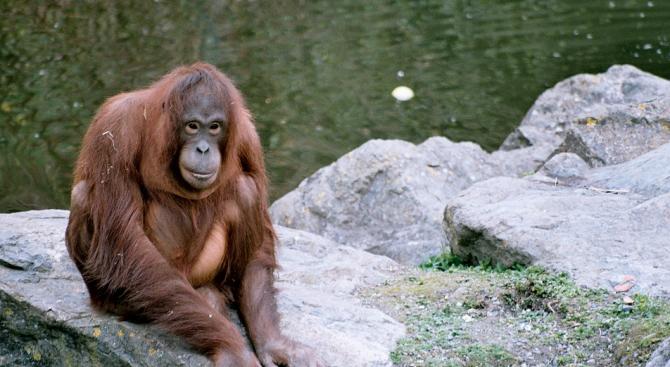 Топ 10 на новооткритите животински и растителни видове (видео)