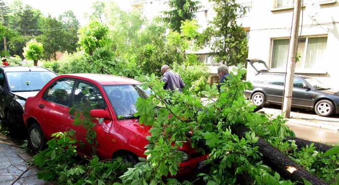 17 паднали дървета след бурята в Пловдив