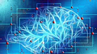 Учени установиха защо човешкият мозък е толкова голям