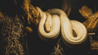 Змия уби двама души с едно ухапване