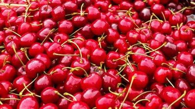 Над 30 пункта за изкупуване на череши са разкрити в община Сливен