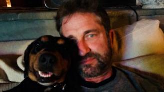 Питбул нахапа кучето на Джерард Бътлър