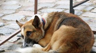 Полицаи разследват смъртта на седем кучета