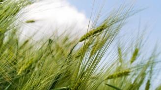 Поискахме от Китай ускоряване на процедурите за износ на селскостопански стоки