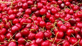 Пунктове в Кюстендилско спират изкупуването на череши