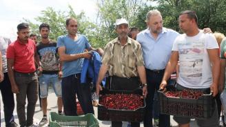 Зам.-министър Цветан Димитров: МЗХГ следи постоянно процесите в производството на череши