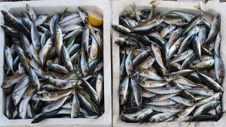 4/5 от улова на риба в Черно море - незаконен