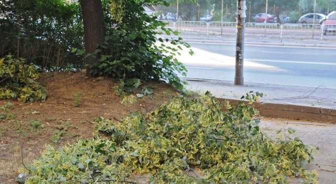 Жена е пострадала след като клони от дърво са паднали
