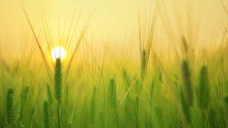 Цената на земеделската земя в Добричка област достига 2032 лева за декар