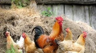 Внимавайте! МЗ с важни съвети заради птичия грип