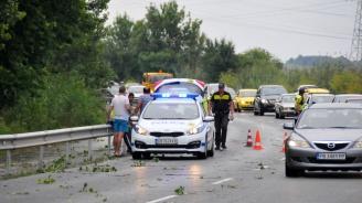 Дърво падна върху автомобил, пътуващ от Созопол към Бургас (галерия)