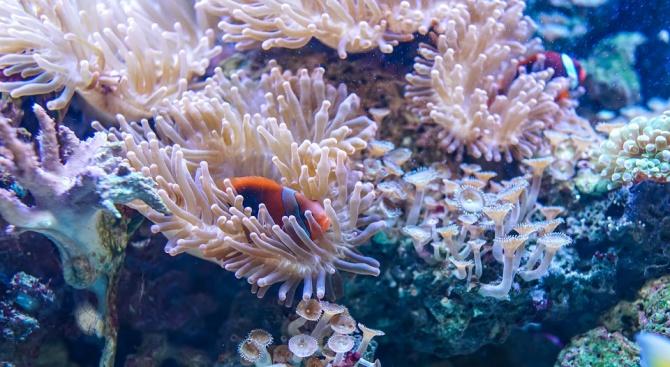 """Кораловите рифове са застрашени от """"удавяне"""""""