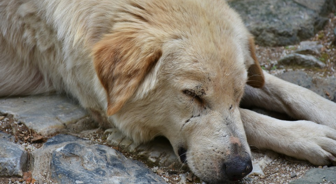 Жестокост в Пещера, пенсионер влачи кучета с колата си през града