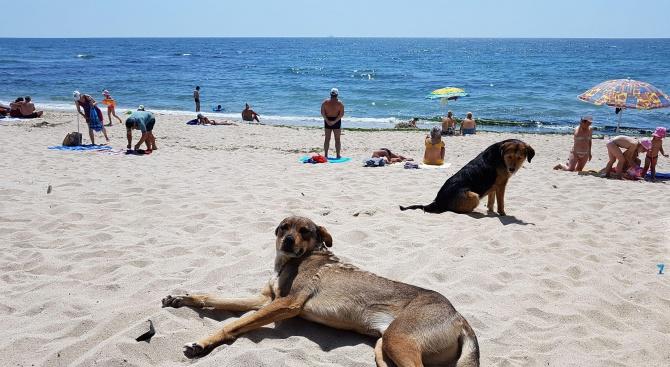 Снимка: Бездомни песове ръсят зарази по варненските плажове