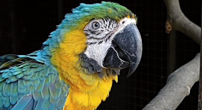 Пожарникари спасиха цирков папагал