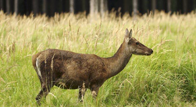 За месец 21 животни от областите Русе, Разград и Силистра
