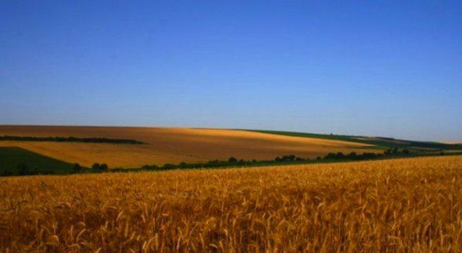 Първите количества зърно от новата реколта в Монтанско се изкупуват