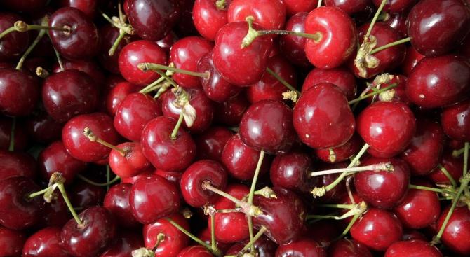 """В Кюстендил днес беше открито 11-то издание на традиционния """"Празник"""