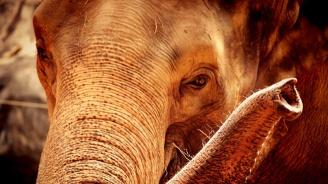 Слонът на Майкъл Джексън избяга от зоопарка във Флорида
