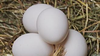 Внимание! Изтеглят от пазара всички яйца с номера 2BG08001 и 3BG08001 в опаковка с номер 0819001