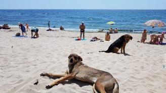 Бездомни песове ръсят зарази по варненските плажове (снимки)