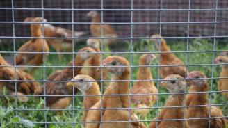 Няма данни за заразени птици с опасния щам H5N1 в България