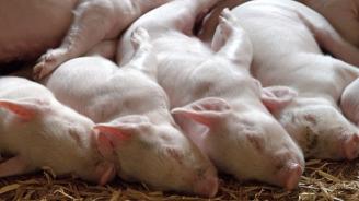 Свикана е Областната епизоотична комисия в Хасково заради чума по животни в Ямболско
