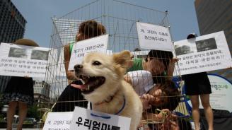Закон в Южна Корея забрани да се ядат кучета