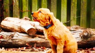 Пуснаха на свобода куче, осъдено за лаене
