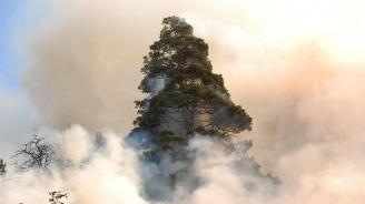 """Голям пожар горя в парк """"Бакаджика"""" в Ямбол (обновена)"""