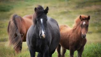 Намериха три убити и шест ранени коня край Вършец