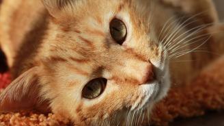 Котка осинови сурикати (видео)