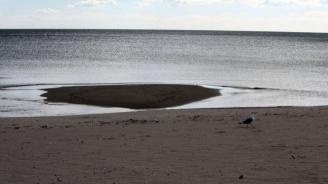 Труп на диво прасе е открит на плаж на 3 км от Крапец