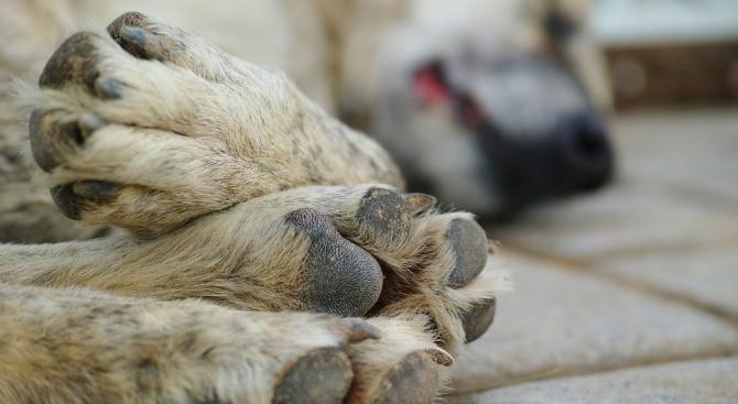 Изхвърлиха 17 бездомни кучета край село Стара Кресна