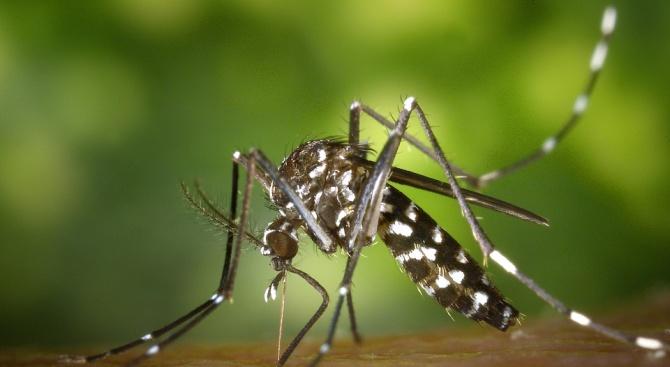 Над 80 на сто от популация комари, които разпространяват треската