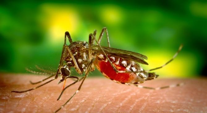 Единайсет души на територията на Сърбия са се разболели от