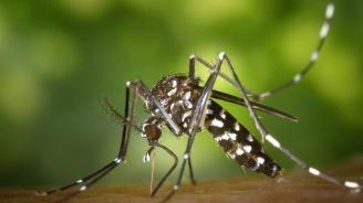 Тест даде обещаващи резултати в борбата с треската денге