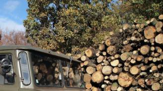 В Банско започва кампания за предоставяне на дърва за огрев