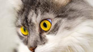 В котешко кафене заснеха как котките предусещат земетресение (видео)