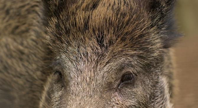 Диви животни, които са на територията на държавен ловен район