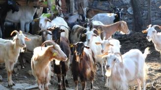 Щабът за борба с чумата по животните прие три нови мерки