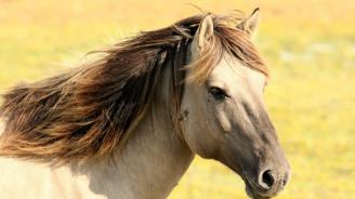 21 хил. лв. глоба за коневъда Пищелов
