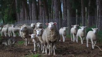 Порожанов: Отлагаме евтаназирането на стада в околностите на с. Болярово и в с. Шарково