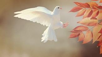 В Кайнарджа подготвят първия по рода си Фестивал на мира