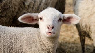 Започва дезинфекция срещу чумата по животните в Пловдивска област