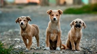 Разследва се умъртвяването на 9 кучета в Исперих