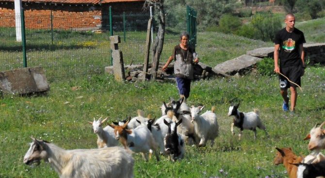 Продължава изплащането на обезщетения след евтаназията на животни в Шарково