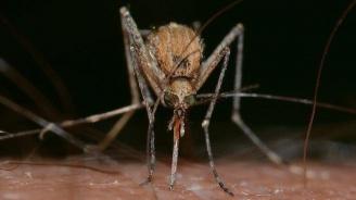 Пръскаха срещу комари в Свиленград