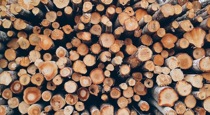 158 кубически метра незаконно добита дървесина са конфискувани през изминалата
